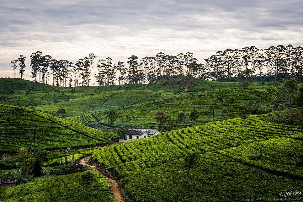 Sri Lanka at dawn