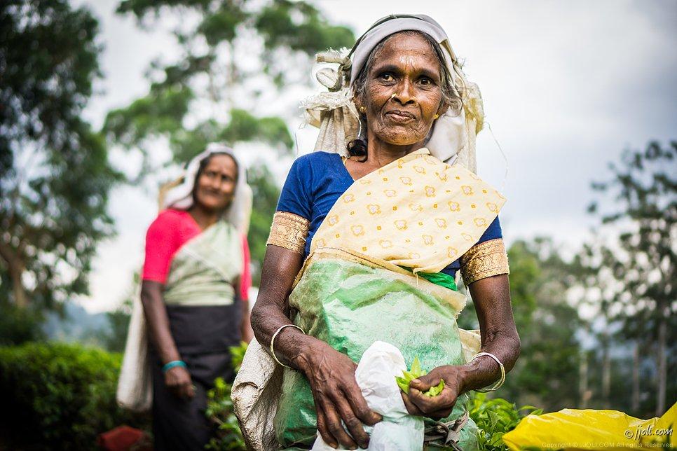 tea-picker, Sri Lanka
